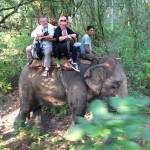 Elephant rides in Nepal, fighting off turkeys in suburbia.