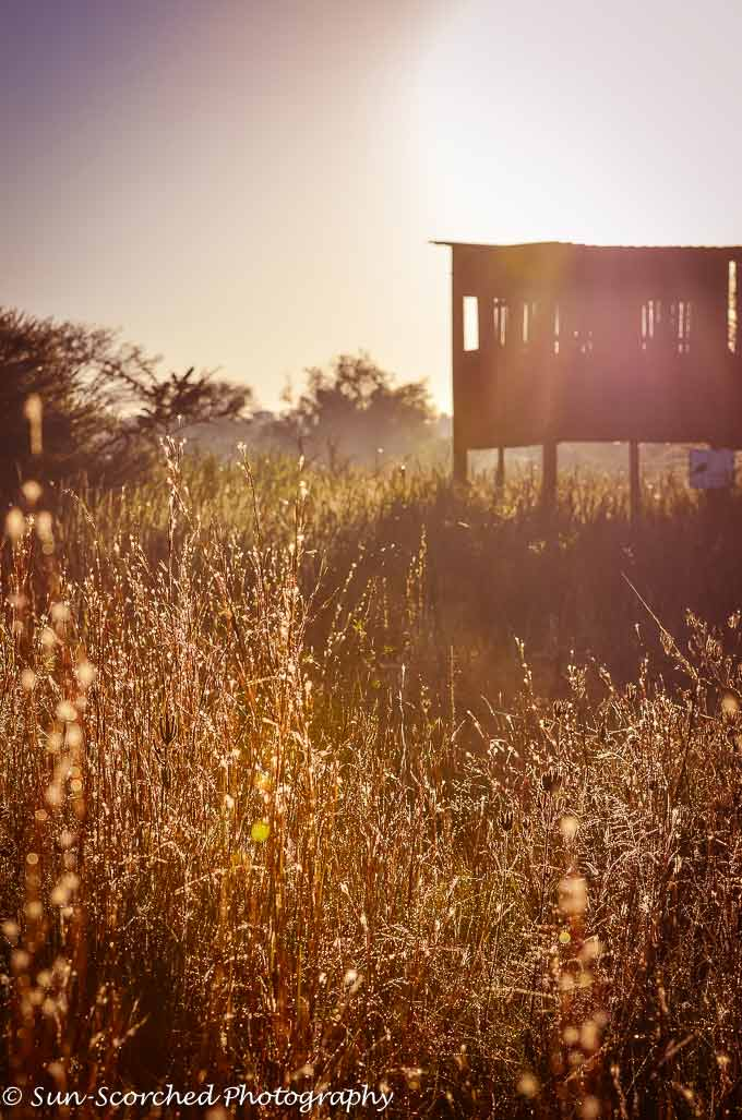 Virtual Safari to South Africa. Photographer Susan Meyers photographs the bush in South Africa. Susan takes us on a trip into the South Africa's bush today.