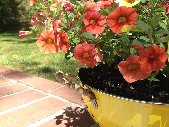 This DIY Colander Flower Planter is so easy to make & adds a touch of whimsy to your porch or patio. This pretty planter is like a breath of fresh air.