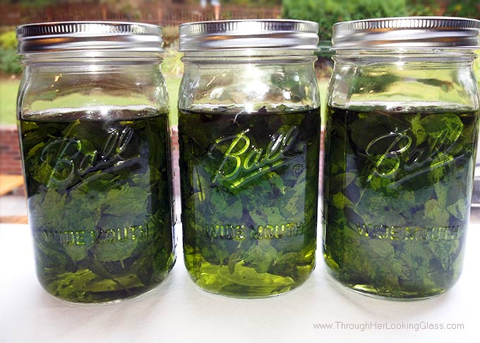 DIY Mint Extract. So easy. Great use for garden mint. Ten minutes. 2 ingredients: mint leaves & vodka. For all your favorite recipes and drinks.