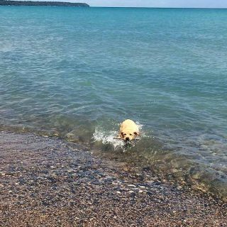 I spent July 4th weekend in Whitefish Bay, WI on Lake Michigan and I just have to tell you all about it today! So many beautiful sights.I spent July 4th weekend in Whitefish Bay, WI on Lake Michigan and I just have to tell you all about it today! So many beautiful sights.