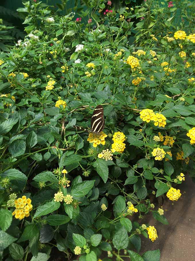 Stolen Monarch