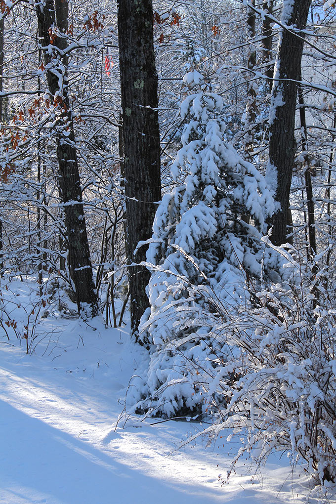 There's nothing like a Frosty New England Morning. I have wonderful childhood memories of wandering the Rhode Island woods behind our house the morning after a freshly fallen snow.