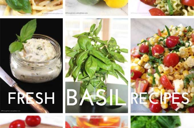 Fresh basil recipes, cocktails, pestos, pasta dishes and pizza, all with fresh basil