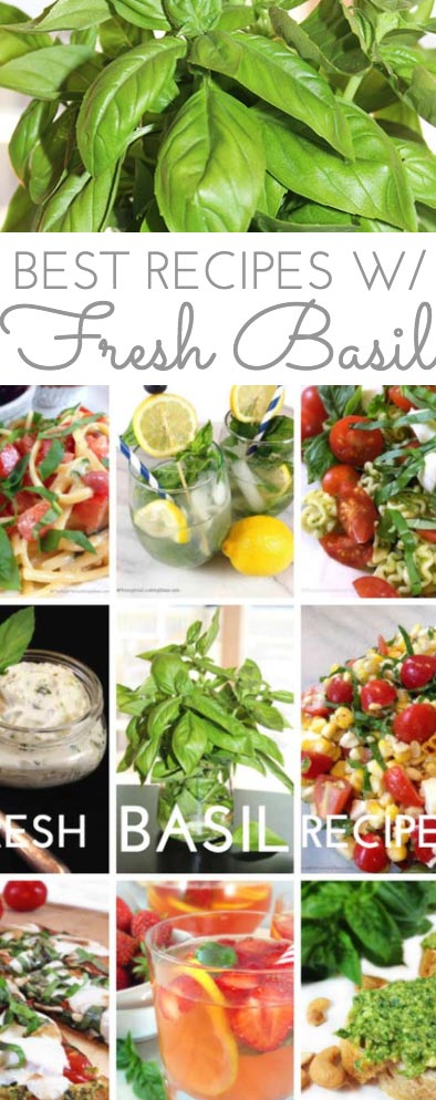 Fresh basil is my favorite fresh herb to cook with. Peppery and sweet, basil is a member of the mint family. There are lots of great Fresh Basil Recipes and tips here on the blog.